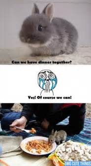 Cute Animal Memes - cute funny animal meme