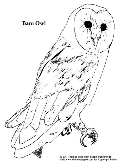 burrowing owl printable pictures burrowing owl coloring page kids coloring page gallery