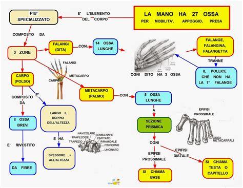 la mano sulla mappa concettuale scheletro della mano scuolissima