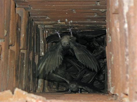 How To Get Bird Out Of Fireplace by Log Burner Maintenance
