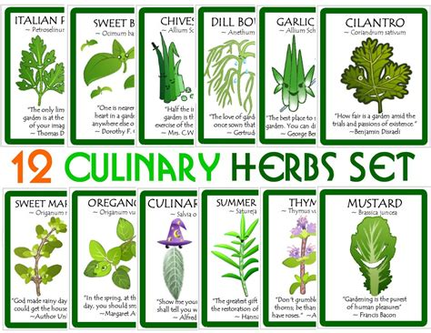 herbal academy using flavorful culinary herbs herbal school garden adventures from mexico to chicago