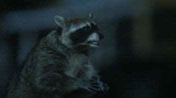 geico tv commercial, 'raccoons, c'mon try it!: it's what