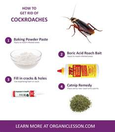 home remedies for roaches 6 ways to instantly get rid of roaches at home