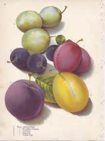 file page 14 plum imperial gage shropshire damson
