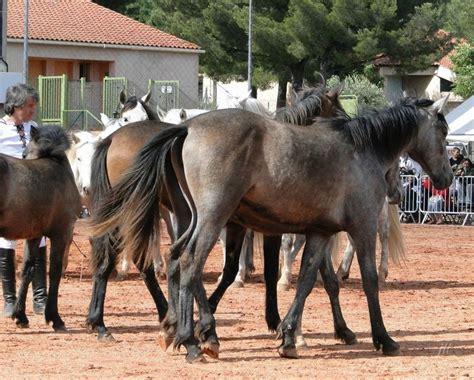 jean fran 231 ois pignon et ses chevaux en liberte a puget