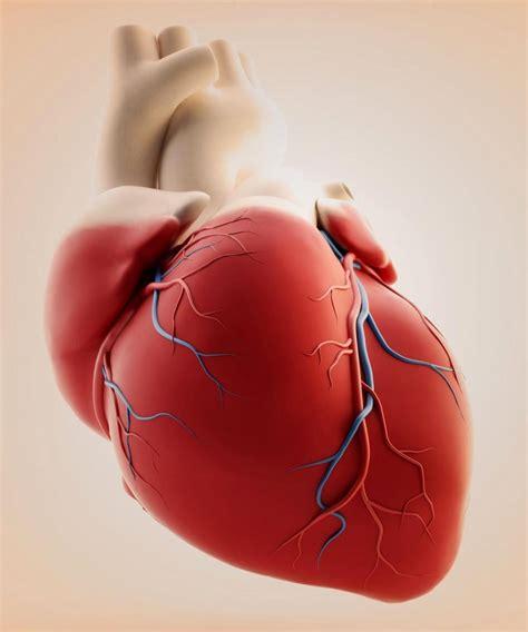 The Heartbreaker by Fetal Surgery Financial Tribune