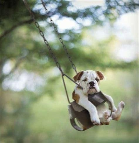 dog in baby swing baby swing dog heart warming pinterest