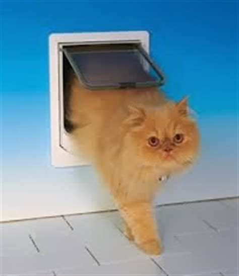 Who Invented The Cat Door by Adventures Of Piglet Scooter Facts Friday