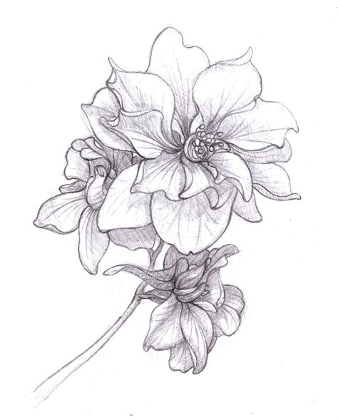larkspur flower tattoo designs larkspur drawing july birth flower search inked