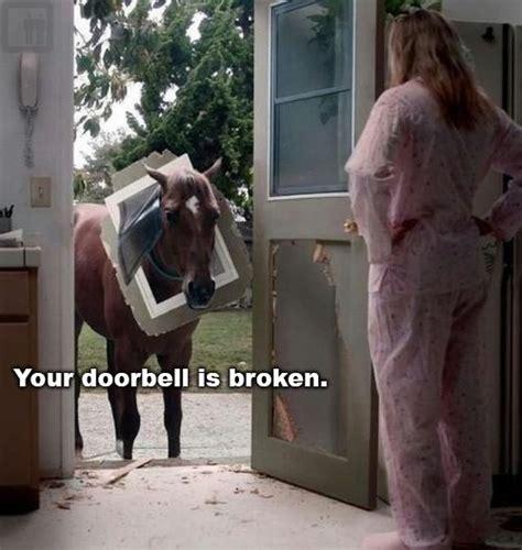 Mr Ed Meme - dog stuck in door