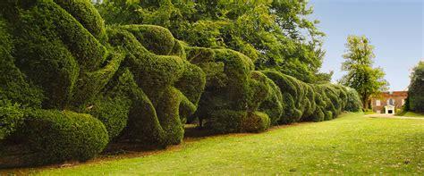fine    cloud pruned topiary hedge  hinton