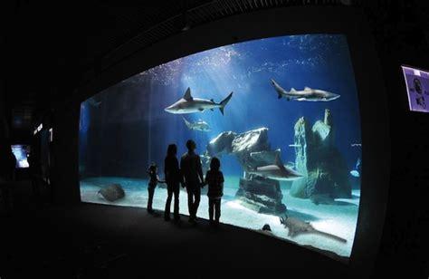 ingresso acquario di genova groupon acquario di genova informazioni e consigli per visitarlo