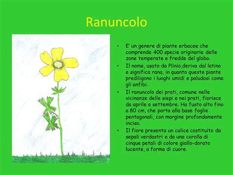 nomi di piante e fiori nomi piante e fiori terrazzo con fiori e piante