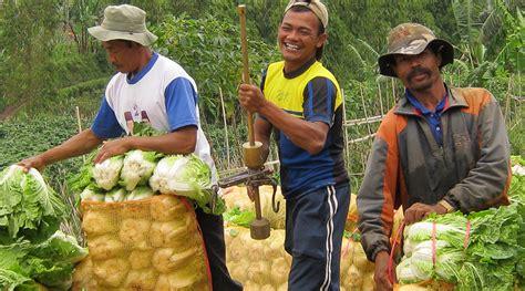 Benih Kacang Panjang Persada royal seed
