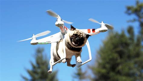 pug drone drone wars tilytily fr