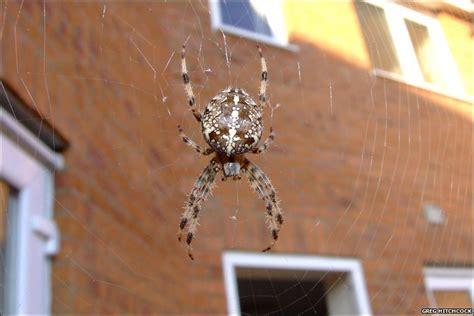 Garden Orb Spider Uk Bite Garden Spider Bite Uk