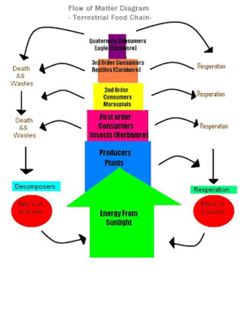 Pattern Of Energy And Matter Flow | factors of global warming