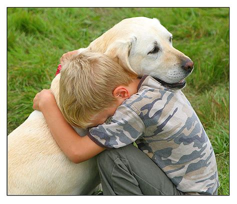 comfort pets study dogs show natural desire to comfort human companions