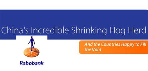 rabo bank uk china s shrinking pig herd is for eu