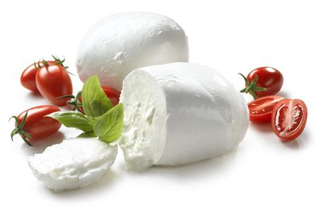 best mozzarella cheese mozzarella the of the mediterranean cuisine