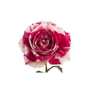 Flower Delivery With Free Shipping - harlequin rose red and white bi color multi colored