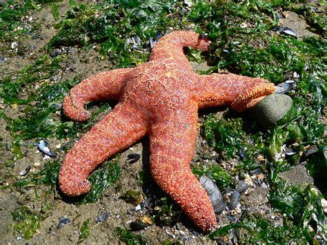 imagenes de animales invertebrados acuaticos fotos gratis playa naturaleza biolog 237 a fauna