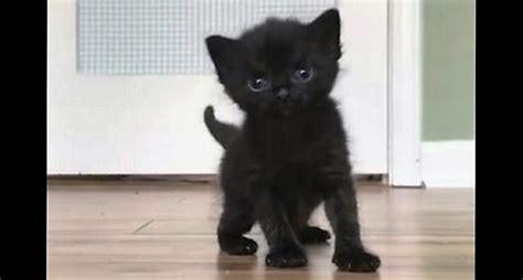 black kitten    sweetest