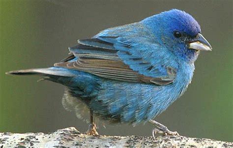 help with bird identification photography forum