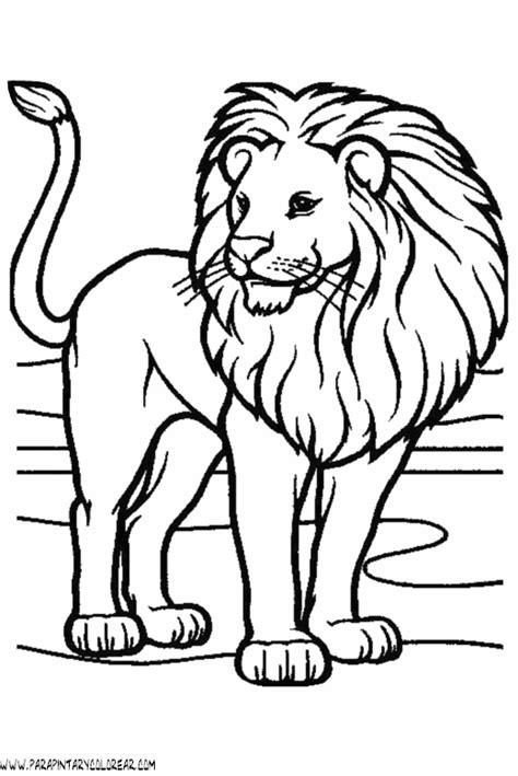 imagenes leones dibujos leones de dibujo imagui