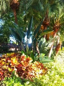 tropical landscape plants 17 best images about plants flowers on