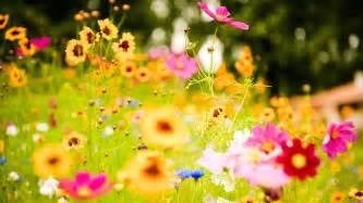 flower power jewish vegetarian society