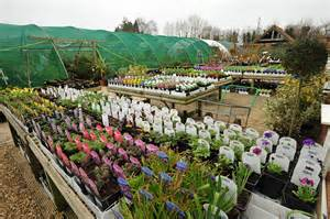 helpston garden centre