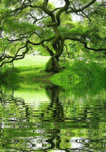 Nature Poems Generous Tree 193 Rbol Generoso