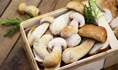 wann pilze suchen pilze sammeln maronen steinpilze und co chefkoch de