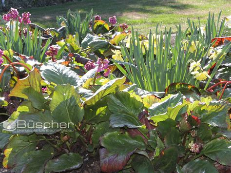 garten und landschaftsbau solingen beispiele b 252 scher gartenbau landschaftsbau solingen