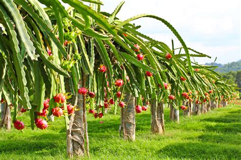 fruit trees garden fruit plant care guide on how to grow fruit