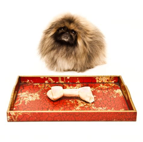foods that are toxic to dogs 6 foods toxic to dogs what not to with your pekingese this season