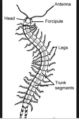 labelled diagram of a millipede march 2016 dr ogbuagu s