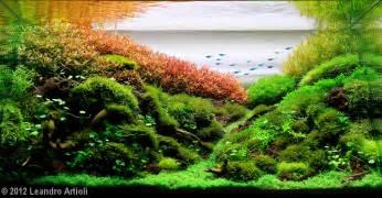 2012 aga aquascaping contest 377
