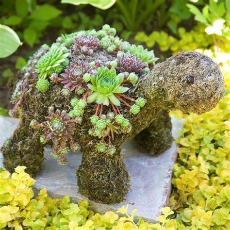 turtle succulent planter succulent topiary turtle turtles pinterest
