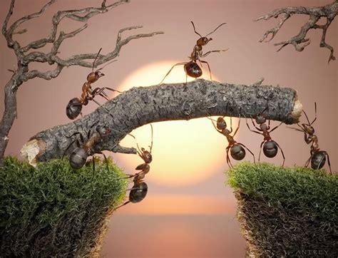 opción b afrontar la adversidad desarrollar la resiliencia resi 191 qu 233 161 resiliencia paperblog