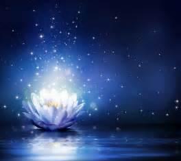 bluewater lights water flower bloom water sparkle lotus flower water