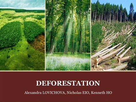 Causes And Effect Of Deforestation Essay by Deforestation Causes Effects And Solutions