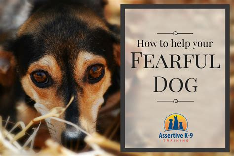 how to fearful dogs assertive k 9 home of the thinschmidt german shepherds