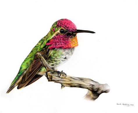 colors of hummingbirds hummingbird colour pencil drawing painting by stribbling
