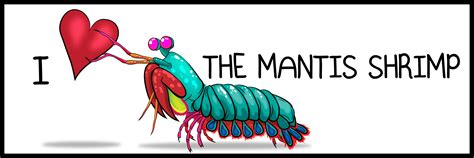 Interesting Mugs by I The Mantis Shrimp Bumper Sticker The Oatmeal