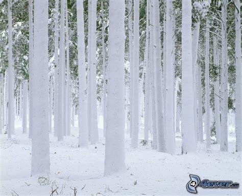 Gamis Frozen Lnice 7 12thn gefrorener wald