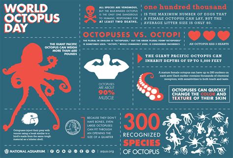 graphics design information world octopus day daily infographic