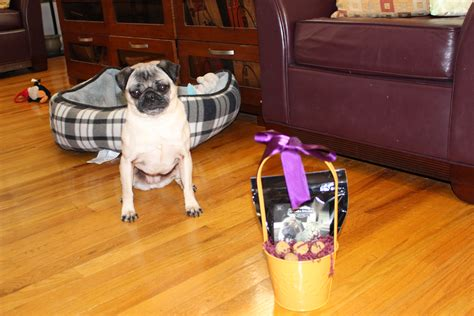 pug happy easter happy easter pug about pug