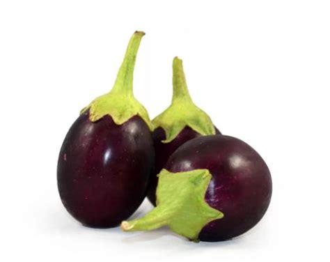 Cara Menanam Terong Lalap cara menanam terong bulat hijau dan ungu di polybag